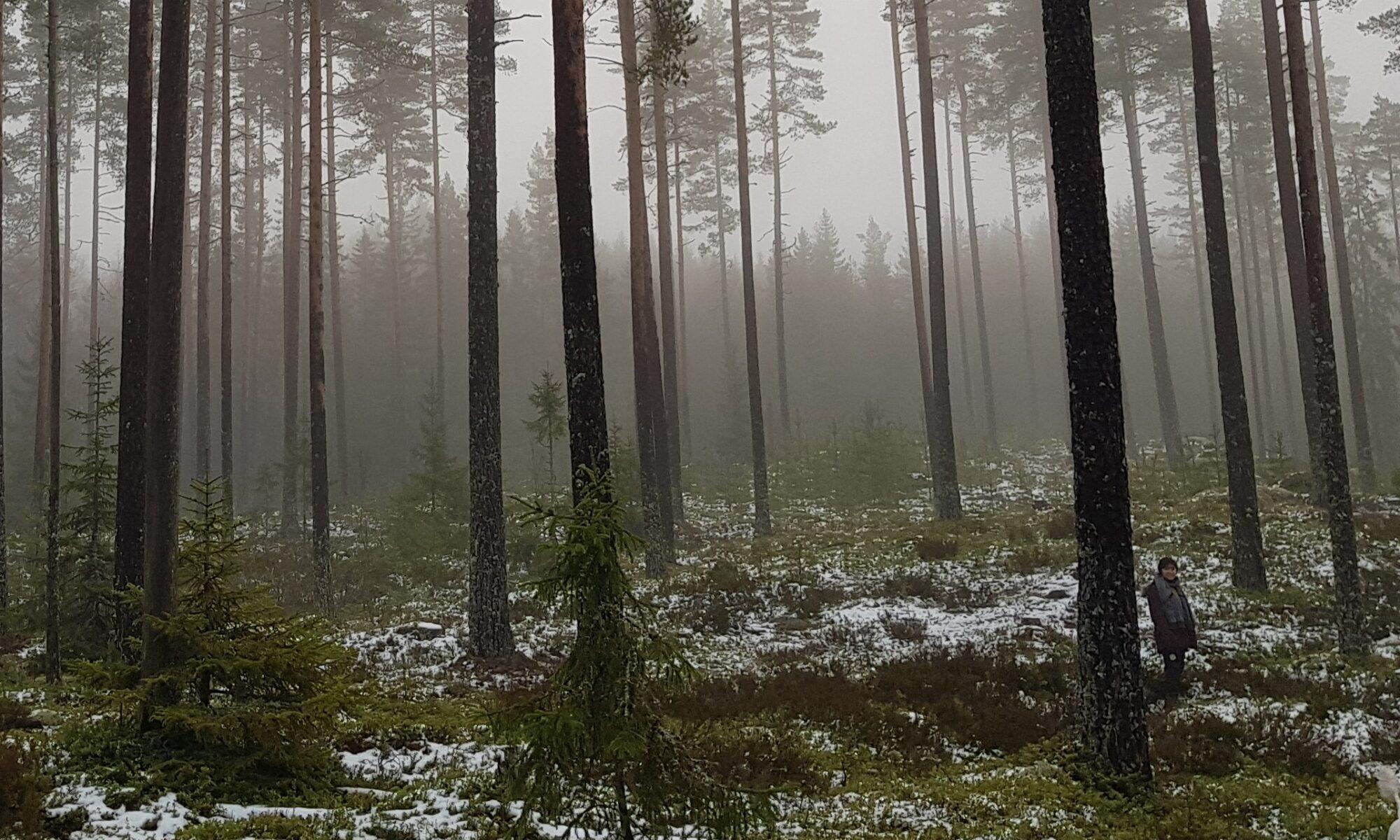 Jarle Skjæveland Trette Menn Marsj i Austmarka Finnskogen